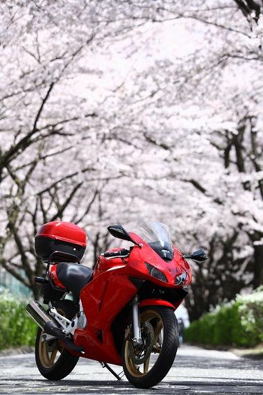 桜とVTR250F