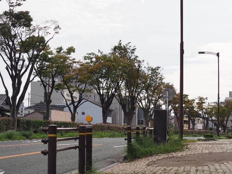 蒲郡街道(R23)ケヤキ並木