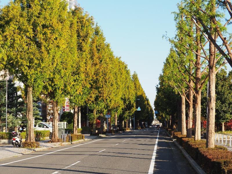大垣市加賀野 ソフトピアジャパン メタセコイア並木