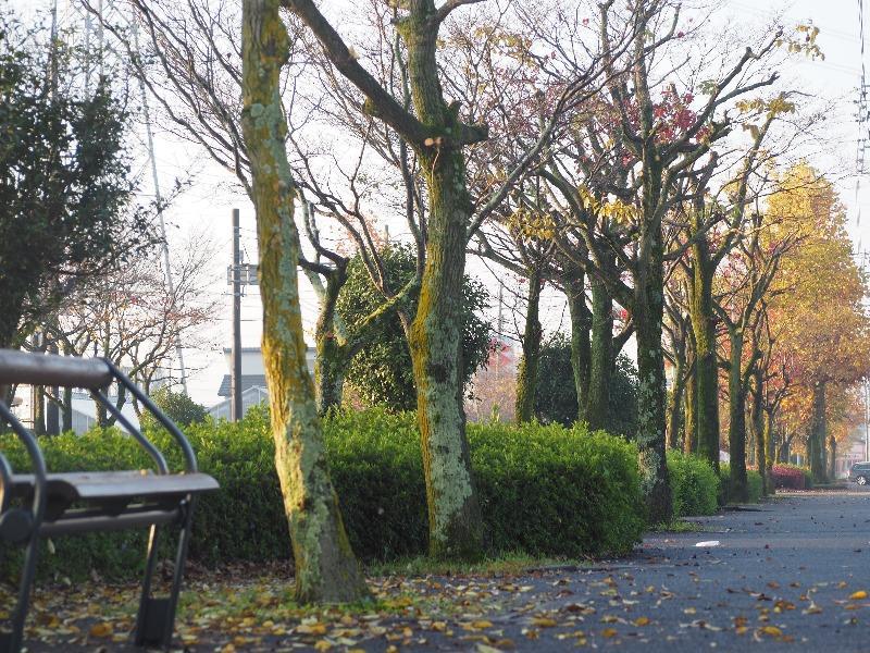 岐阜大学……の前の並木道