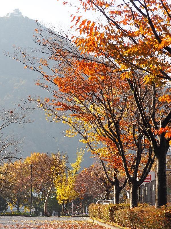 長良公園から金華山