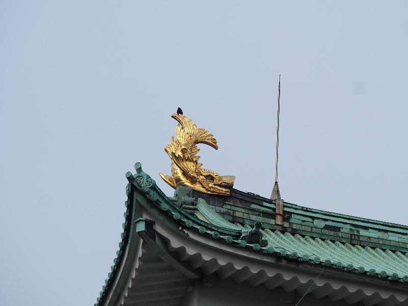 名古屋城 本丸から天守 しゃちほこ(1)