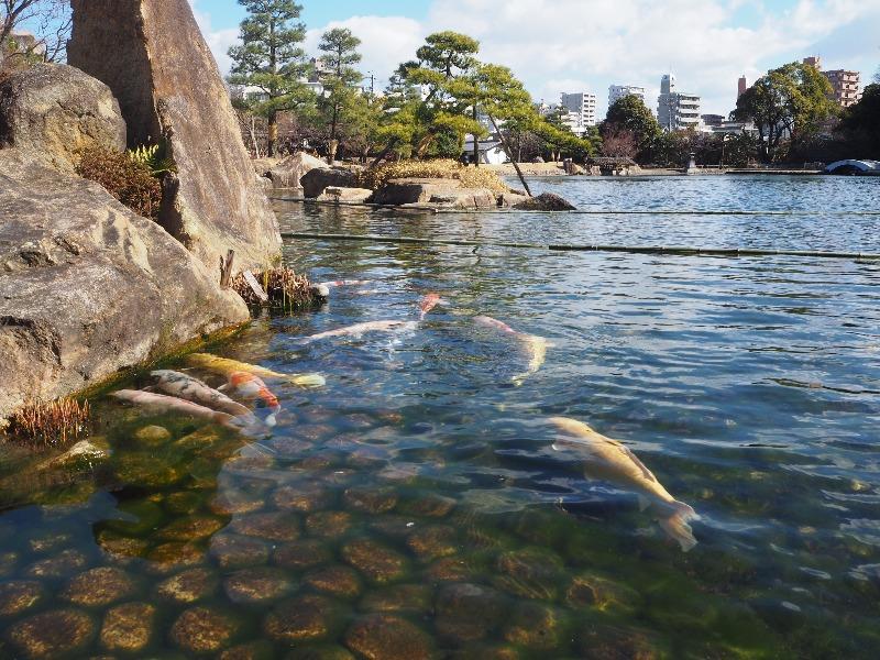 徳川園 亀島