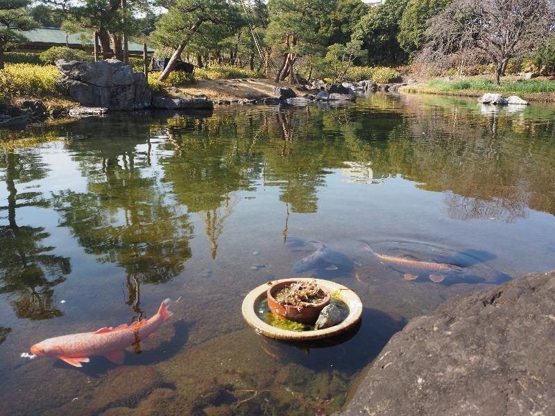 白鳥庭園 中の池