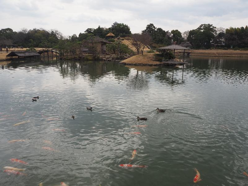 後楽園 沢の池