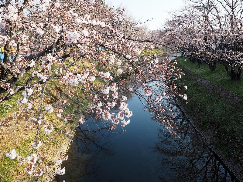 各務原 新境川堤(2)