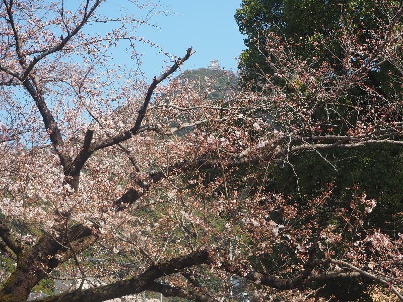 川原町公園から岐阜城