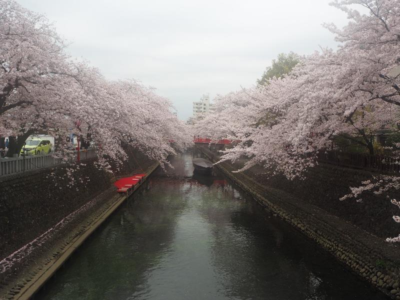 大垣 四季の路(船町湊跡・住吉橋界隈)(1)