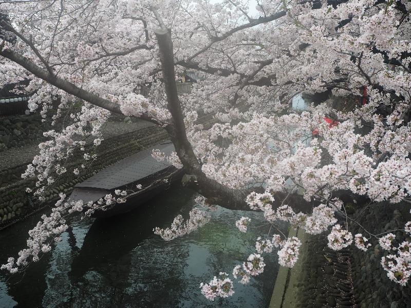 大垣 四季の路(船町湊跡・住吉橋界隈)(3)