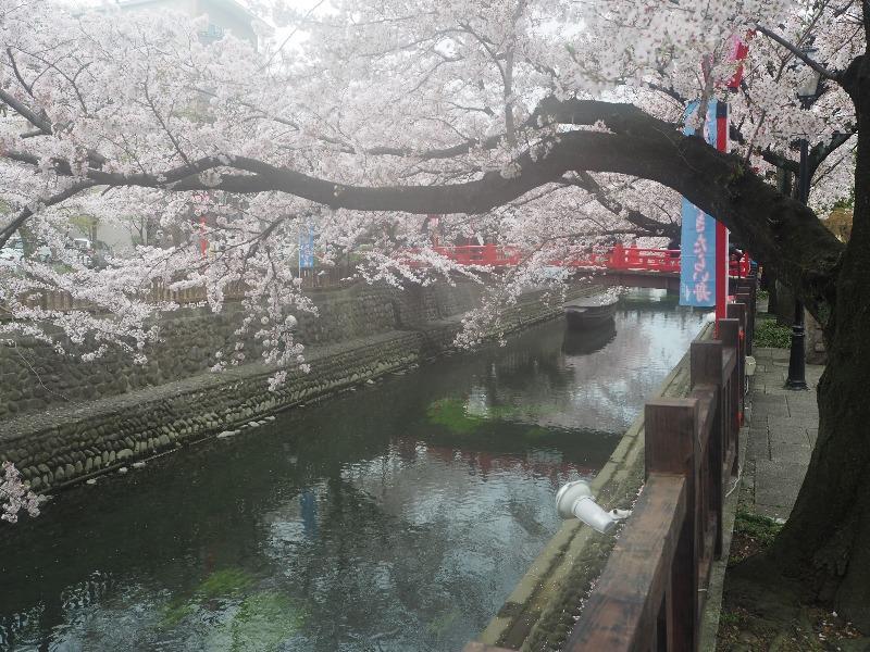 大垣 四季の路(船町湊跡・住吉橋界隈)(4)