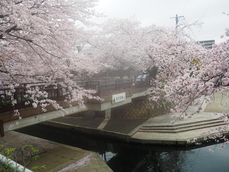 四季の路 四季の広場 美登鯉橋(1)