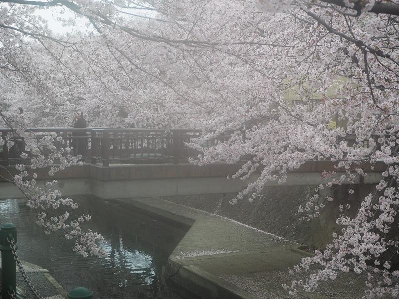 四季の路 四季の広場 美登鯉橋(2)