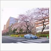 みんカラ投稿企画!ローバー220クーペと桜!