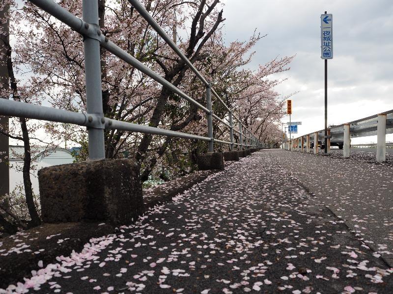 墨俣 県道31号線 長良川 長良大橋