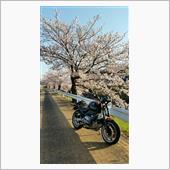 通勤ングと桜