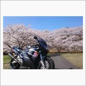 みんカラ投稿企画!愛車と桜!GSX-Rと桜。