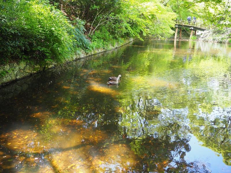 浜松城公園日本庭園 池