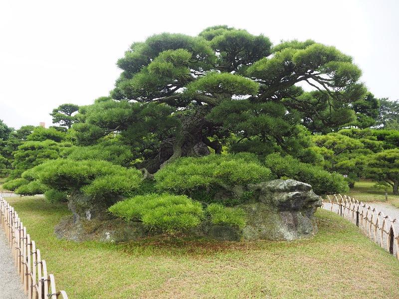栗林公園 鶴亀松(百名松)