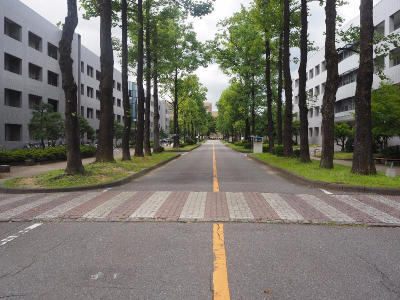 富山大学 ゆりの木通り