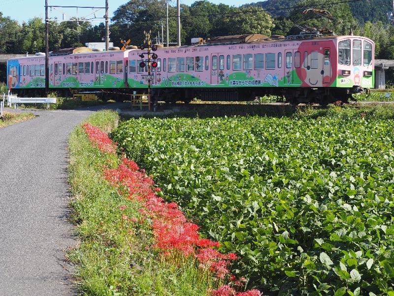 近江鉄道 武佐3号踏切 800系電車(1)