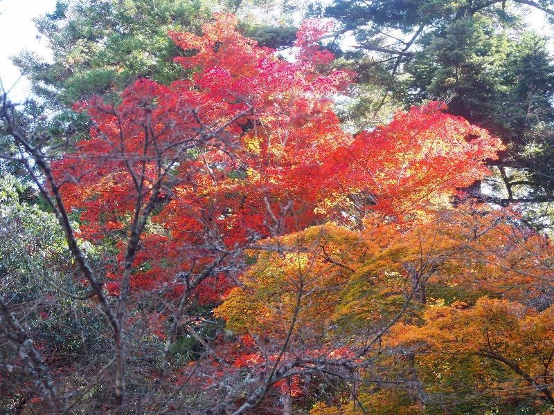 宮島 紅葉谷公園(2)