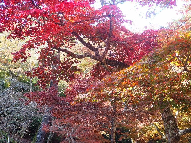 宮島 紅葉谷公園(3)