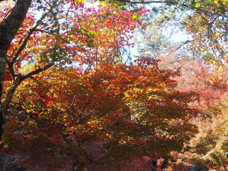 宮島 紅葉谷公園(4)