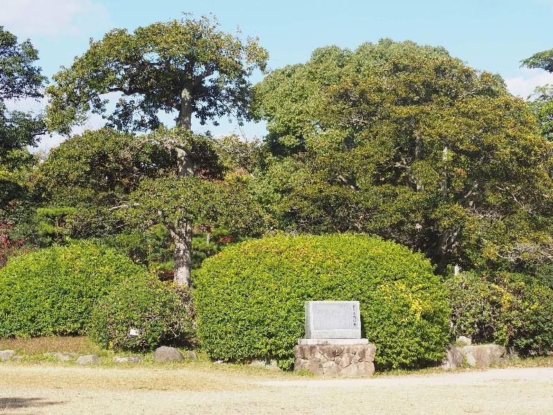広島城 大本営前庭築山 被爆樹木 クロガネモチ