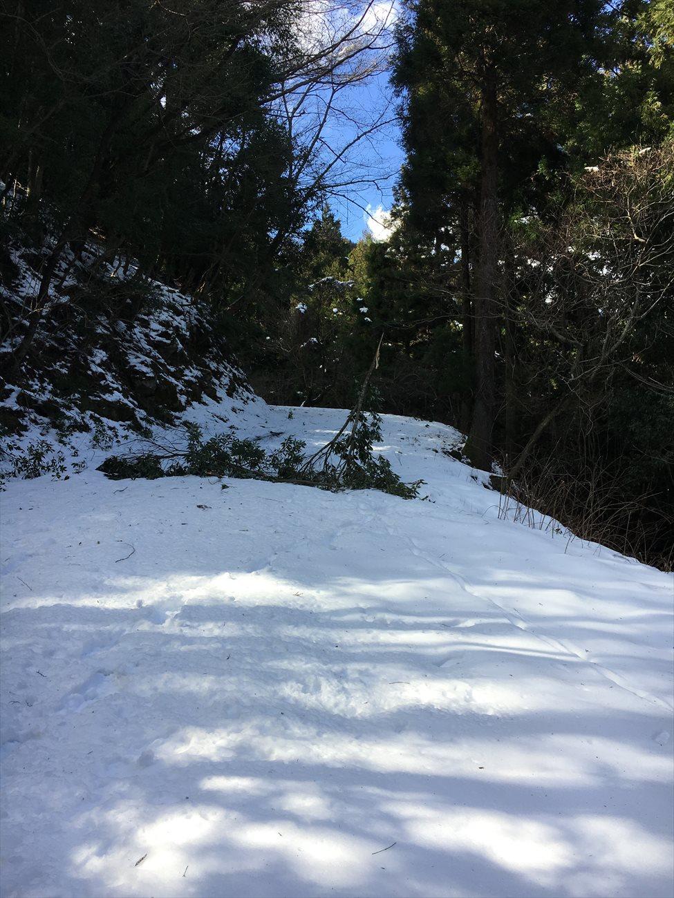 強風で倒れていた木