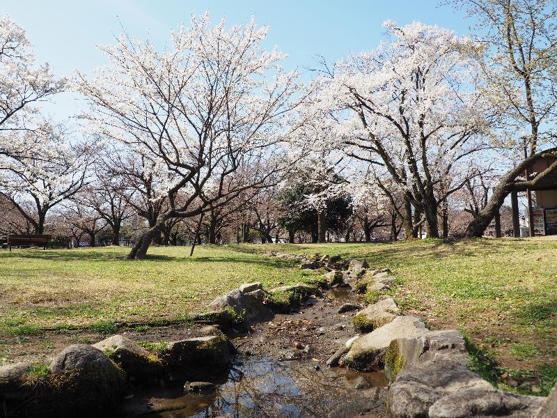 各務原市民公園 桜(1)