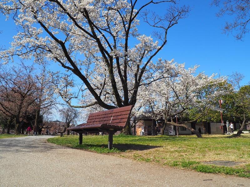 各務原市民公園 桜(2)
