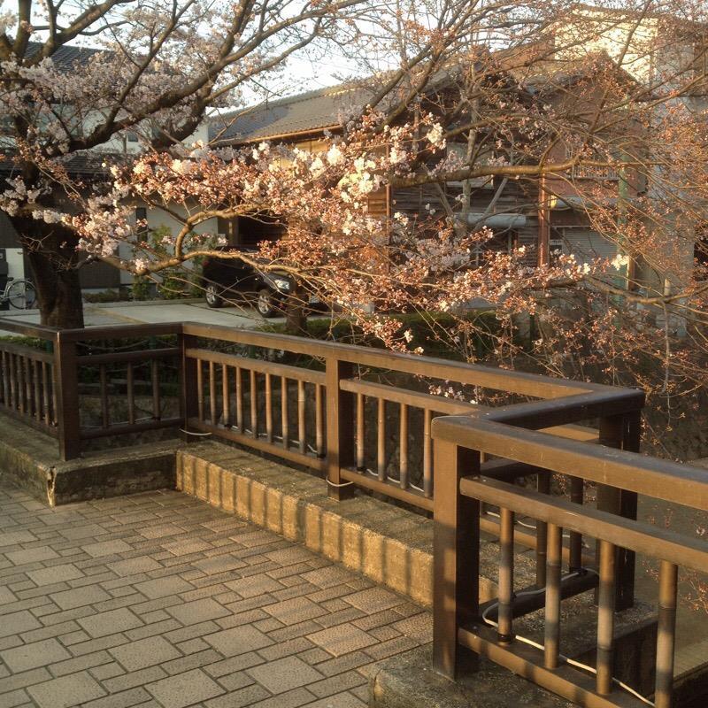 美登鯉橋(3)