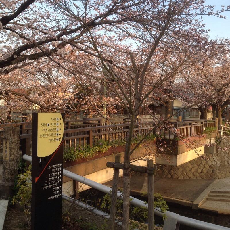 美登鯉橋(4)