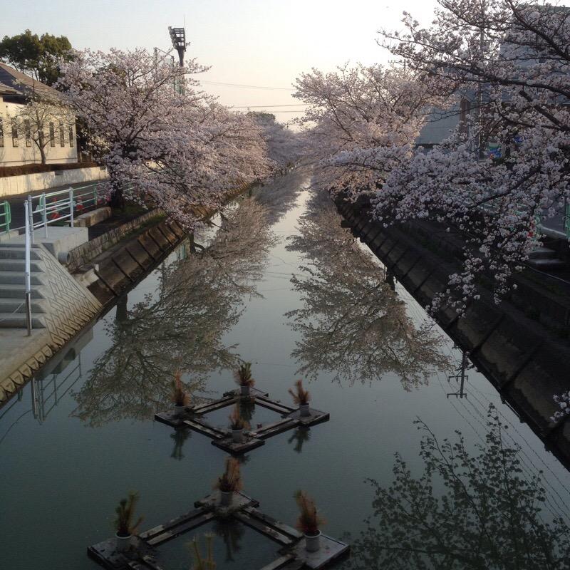 輪之内文化会館(プラネットプラザ)中之江川 桜(2)