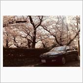 満開の桜とユーノス500