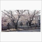 2018 桜ともん吉君