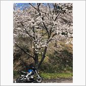2018桜満開