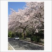 2018 桜の季節
