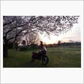 桜と日の出とバイク