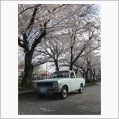 みんカラ投稿企画!愛車と桜!