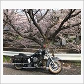 """""""ハーレーダビッドソン Evo""""の愛車アルバム"""
