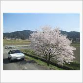 桜TRIP2018 BX16TRS