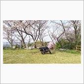 みんカラ投稿企画!愛車と桜!ゴリラ