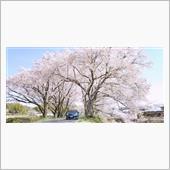 南信州の桜とともに
