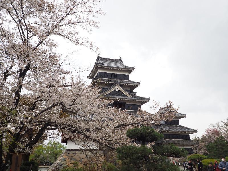 国宝 松本城 小笠原牡丹から天守閣(2)