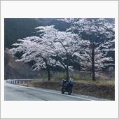 """""""ヤマハ XT1200ZEスーパーテネレ""""の愛車アルバム"""