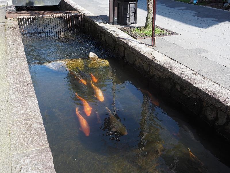 瀬戸川と白壁土蔵街(1)