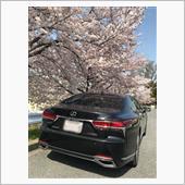 桜吹雪の中、LS500‼️