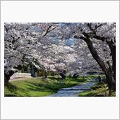 桜🌸の画像
