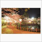2018夜桜の画像